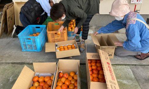 ボナペティ 久留米 フードドライブ 柿の仕分け